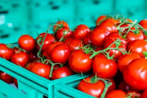 a closeup shoot to some tomatoes in a green crate - red color of tomates are very bright.